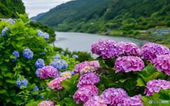 ダム湖に咲く花