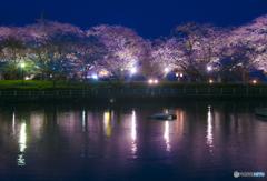 大村公園ライトアップ