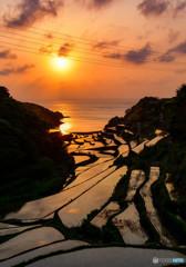 夕日が照らす棚田