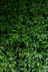 群生する植物