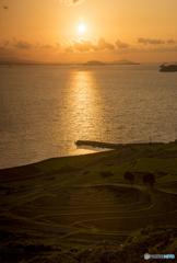 夕陽の棚田