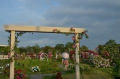 薔薇の園へ・・