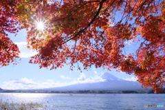 秋晴れに煌めいて