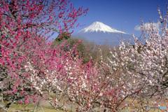 2月23日 ~富士山の日~