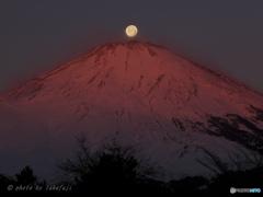 富士の赤嶺に月は舞い降りて