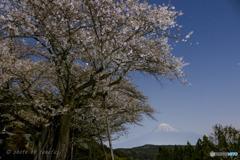 春月に浮かぶ