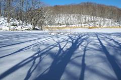 冬晴れの観音沼