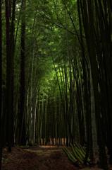 竹藪ヤブ蚊