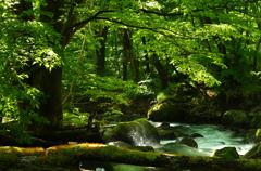 渓流の息吹