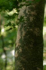 木漏れ日の絵師