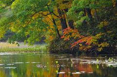 未完の秋:矢ノ原湿原