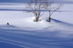 雪上のツインズ