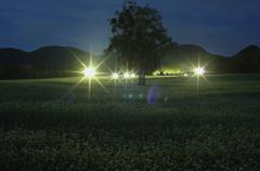 ライトアップ蕎麦畑
