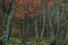 オジサンの散歩道:秋