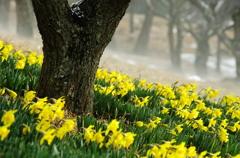 春立ちぬ?