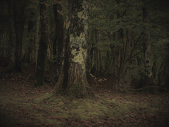 不機嫌な森