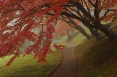 霧のさんぽ道