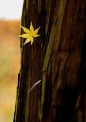 秋の記憶:偶然