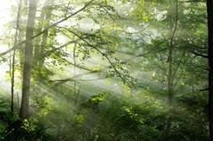 光のパンチ