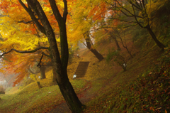 晩秋のときめき