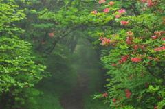 朝霧の小径