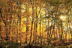 夕映えの森