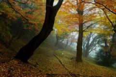 晩秋を踏む