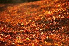 主役なき秋の骸