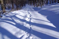 いつもの散歩道:雪原