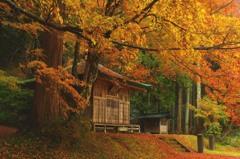 秋を惜しむ
