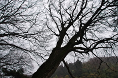 早春の木霊