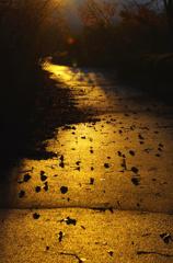 冬ざれの小道