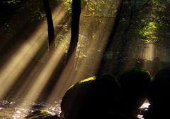 光の侵入者