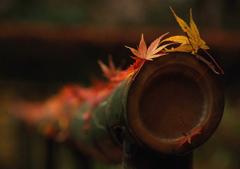 雲巌寺境内 : 落葉