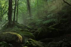 密林の木洩れ日