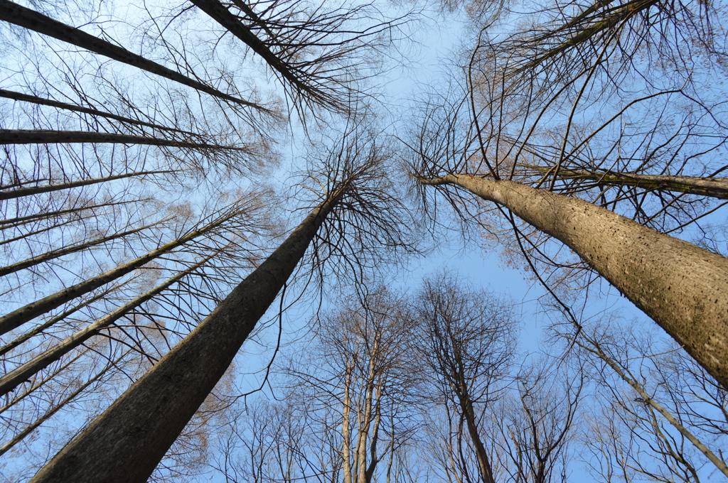 背のたかーい木