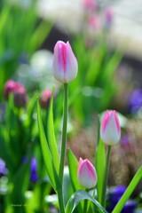 ほっこり春色♪