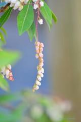 春色の蕾♪