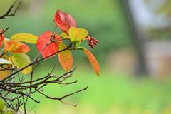 秋への誘い