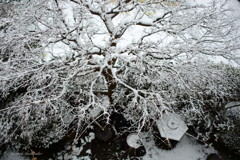 上から見た雪化粧