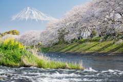 富士見、花見