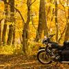 秋色に佇む