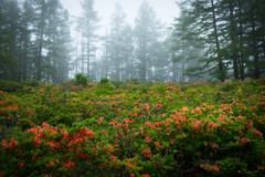 霧の先に広がる花園
