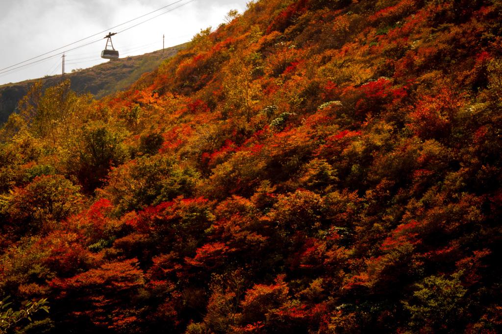 紅葉を登る