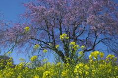 亀岡八幡宮の花 壱