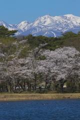 南湖公園の春