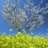 亀岡八幡宮の花