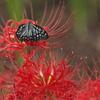 境三つ木の蝶