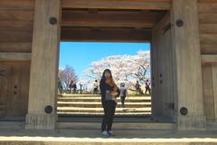 桜満開 小峰城