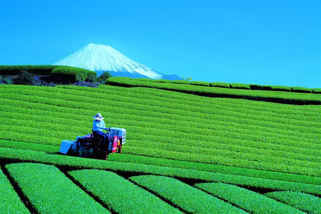 静岡茶2021.4.30_1